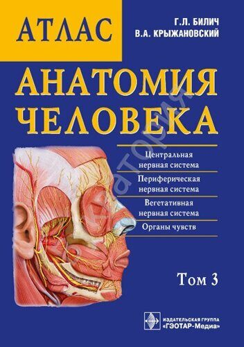 Анатомия человека: атлас В 3-х т.Т3